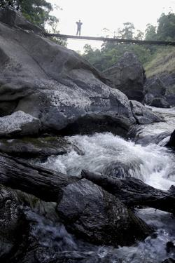 Trek Path to Kunthipuzha, Silent Valley National Park, Palakkad District, Kerala, India, Asia by Balan Madhavan