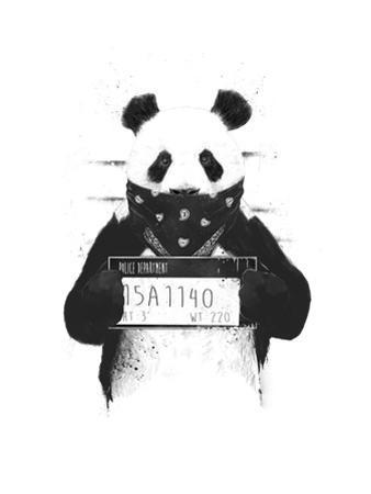 Bad Panda by Balazs Solti