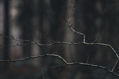 https://imgc.allpostersimages.com/img/posters/bald-branches-in-the-forest_u-L-Q1EXKKG0.jpg?artPerspective=n