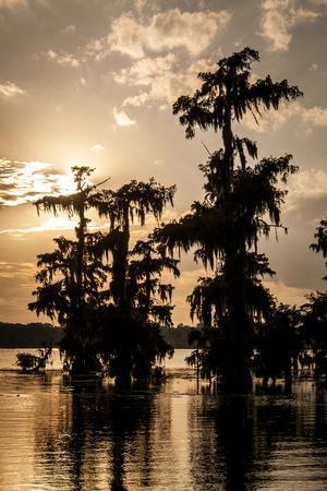https://imgc.allpostersimages.com/img/posters/bald-cypress-in-water-lake-martin-atchafalaya-basin-louisiana-usa_u-L-PXR88C0.jpg?p=0