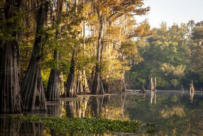 https://imgc.allpostersimages.com/img/posters/bald-cypress-in-water-pierce-lake-atchafalaya-basin-louisiana-usa_u-L-PN6WXK0.jpg?p=0