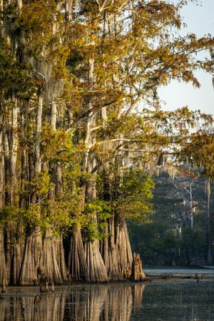 https://imgc.allpostersimages.com/img/posters/bald-cypress-in-water-pierce-lake-atchafalaya-basin-louisiana-usa_u-L-PXR87B0.jpg?p=0