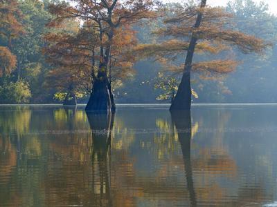 https://imgc.allpostersimages.com/img/posters/bald-cypress-trees-submerged-in-water-white-river-national-wildlife-refuge-arkansas_u-L-Q1D00AK0.jpg?p=0