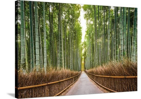 Bamboo Forest, Kyoto, Japan-Pangea Images-Stretched Canvas Print