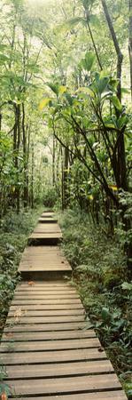 Bamboo Forest, Oheo Gulch, Seven Sacred Pools, Hana, Maui, Hawaii, USA