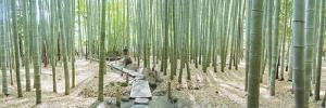 Bamboo Trees at a Temple, Hokokuji Temple, Kamakura, Kanagawa Prefecture, Kanto Region, Honshu, ...