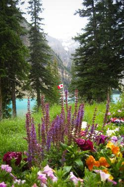 Banff Flowers In National Park Nature Photo Poster
