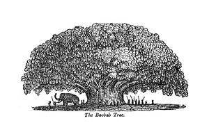 Baobab Tree and Elephant