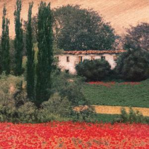 Poppies I by Barbara Carter