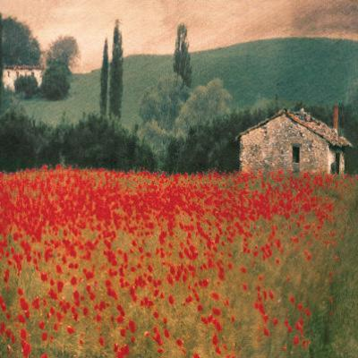 Poppies II by Barbara Carter