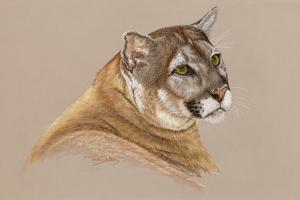 Cougar by Barbara Keith