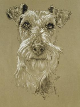 Irish Terrier by Barbara Keith