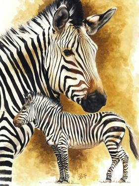 Mountain Zebra by Barbara Keith