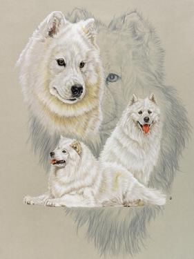 Samoyed by Barbara Keith