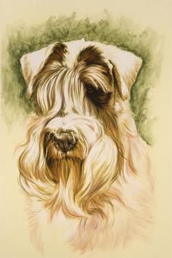 Sealyham Terrier by Barbara Keith