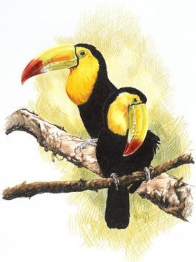 Toucans by Barbara Keith