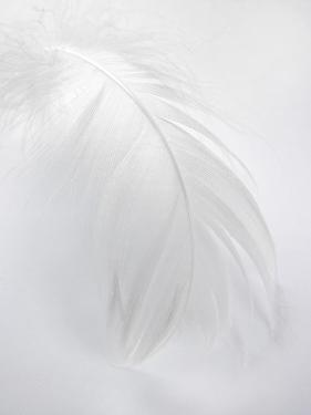 A White Feather by Barbara Lutterbeck