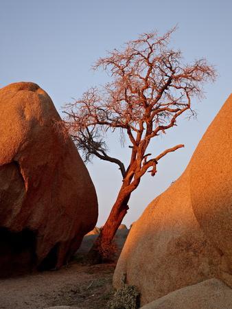 https://imgc.allpostersimages.com/img/posters/bare-tree-among-boulders-at-sunrise-joshua-tree-national-park-california_u-L-PFNB4G0.jpg?p=0