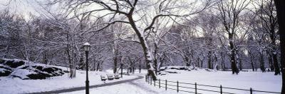 Bare Trees During Winter in Central Park, Manhattan, New York City, New York, USA