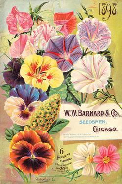 Barnard Seedsmen Chicago