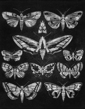 Eleven Moths by Barry Goodman