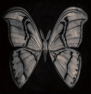 Moth by Barry Goodman