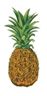 Pineapple by Barry Goodman