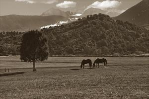 Mancos Morning by Barry Hart