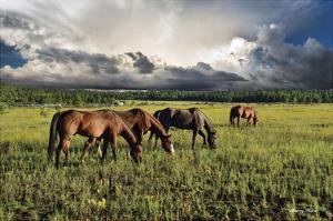 Pammie's Pasture by Barry Hart