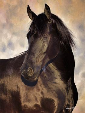 The Bandit by Barry Hart