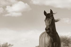 The Bay Mare II by Barry Hart