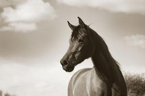 The Bay Mare by Barry Hart