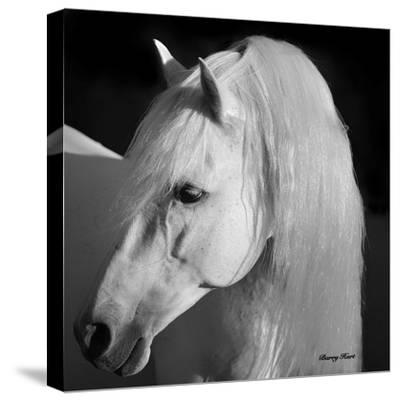 Barry Hart Evening Glow Western Animal Horse Photograph Print Poster 27x22
