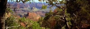 The Grand Canyon, Day Time, View over the Landscape of the Canyon and the Green Vegetation by Barry Herman