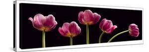 Five Tulips by Barry Seidman