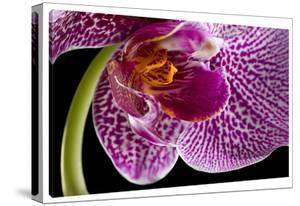Purple Orchid 2 by Barry Seidman