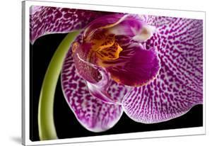 Purple Orchid 2 by Barry Seidman