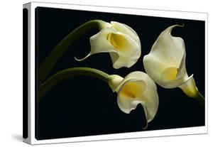 Three Calla Lillies by Barry Seidman