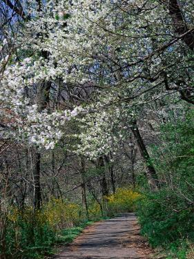 Path, Branch Brook Park, Newark, NJ by Barry Winiker
