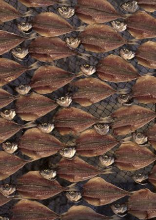 Dried and Filleted Fish, Nazare, Spain
