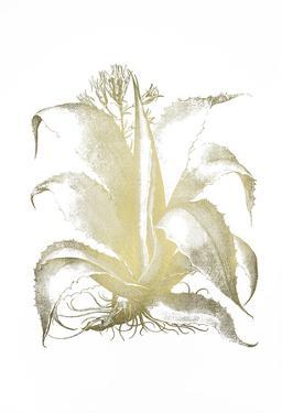 Gold Foil Aloe II by Basilius Besler