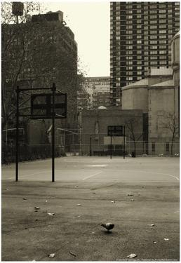 Basketball Court Pigeon NYC