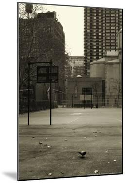 Basketball Court Pigeon NYC