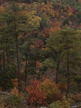 Autumn Colors Paint a Beautiful Fall Forest Landscape by Bates Littlehales