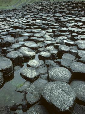 The Giant's Causeway Rock Formation of Volcanic Basalt Rock by Bates Littlehales