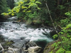 The Sol Duc River Rushing Through Lush Woodlands by Bates Littlehales