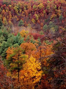 Trees in Autumn Hues on a Mountain Side by Bates Littlehales