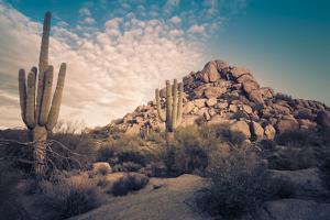 Desert Landscape in Scottsdale, Phoenix, Arizona Area - Image Cross Processed by BCFC