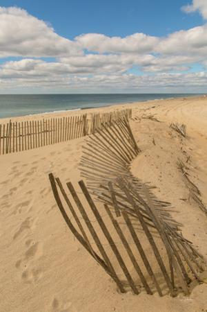 Beach Dunes II