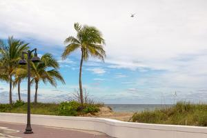 Beach with palm trees and a helicopter in air in Fort Lauderdale, Broward County, Florida, USA